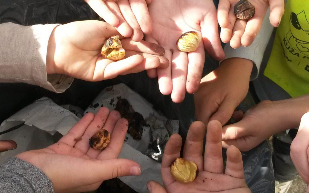 Kostanjev piknik (OPB)